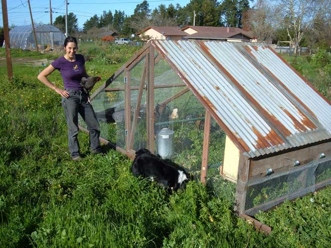 Deborah Grace and Chicken Tractor